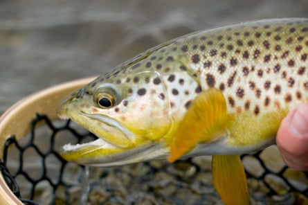 A lazy 59-mile float through deep limestone canyons, green meadows and pine forests that support the best brown trout fishery in the state.