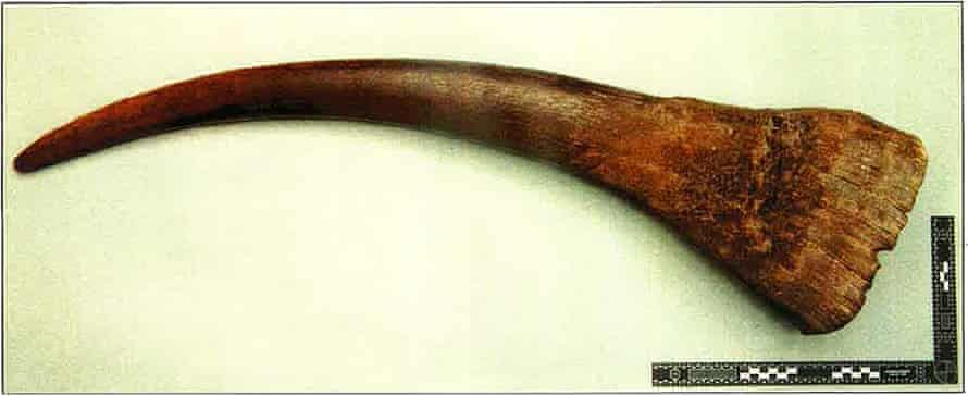 An animal horn found in Allawi's home by police from the Met's wildlife crime unit