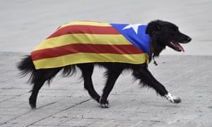 A dog draped in a pro-independence Catalan flag