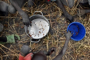 Children collect grain spilt on the field from gunny bags that ruptured upon ground impact following a food drop from a plane at a village in Ayod county, South Sudan