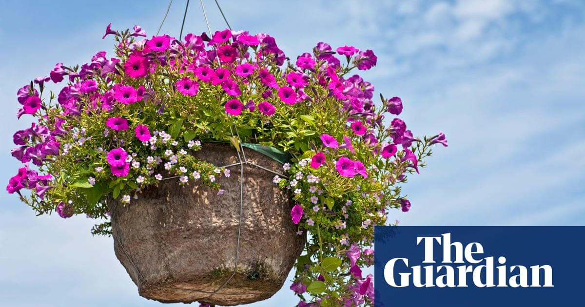 Fabulous A beautiful hanging basket – and six other signs you've mastered LW93