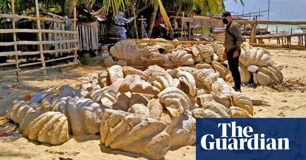 Philippines seizes illegally harvested giant clam shells worth $25m