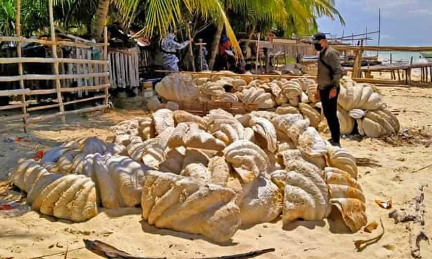 Some of giant clam shells seized in the Philippines.