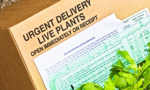 Live plants delivered with instructions … it was when they were missing the trouble started.