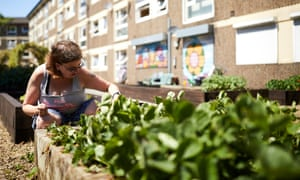 Marie Kelly from the Lower Falinge activity group, gardening on the community allotment on the estate in Rochdale