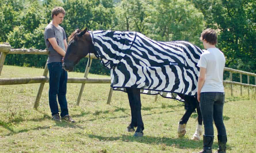 Horse wearing zebra coat
