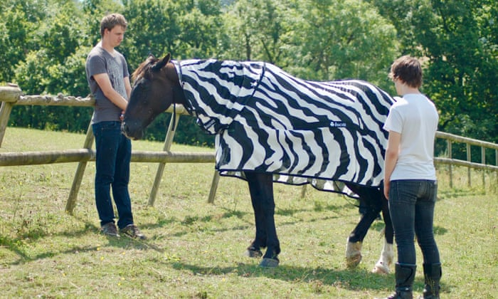 Why the zebra got its stripes: to deter flies from landing
