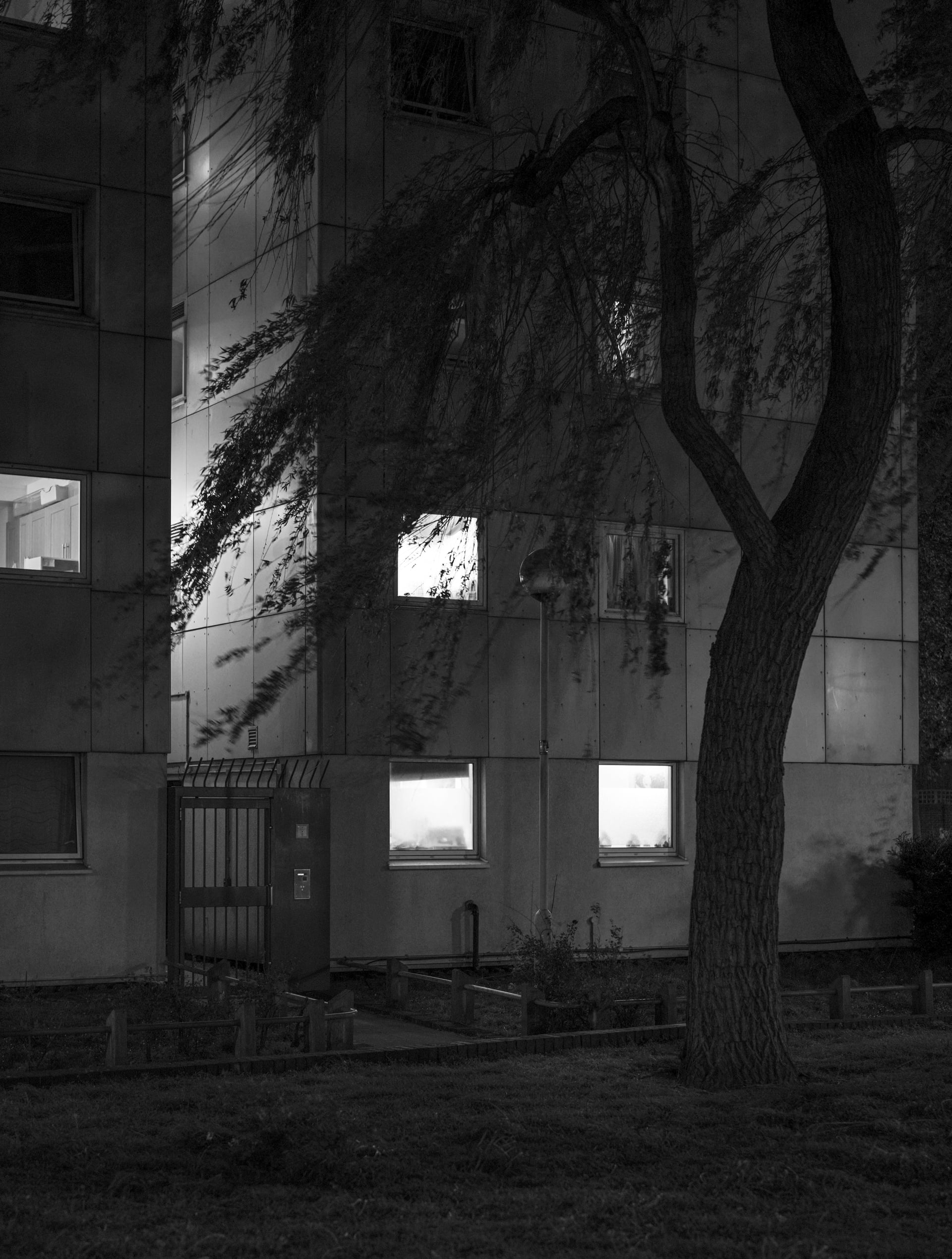 Image of trees silhouetted against lighted windows at night