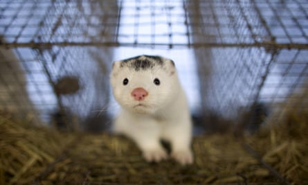 Mink and fox farms are to be banned in Norway after a government decision to phase out the practice by 2025.
