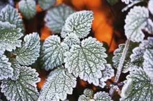 Frost dusts the leaves of plants on Clapham Common London