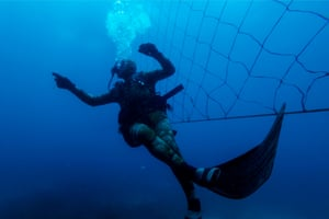 Shark activist Walter Bernardis swims along a shark net during a dive.