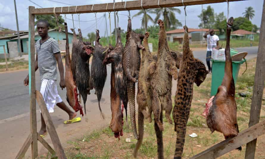 A man walks past bushmeat including pangolins, bush rats and tiger cats for sale on the roadside in Equatorial Guinea.