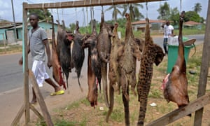 A man walks past a rack of bushmeat that includes the increasingly rare pangolin, now on the point of extinction.