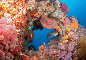 Indonesia's Raja Ampat coral reef, as Prince Harry has shown his support for his father's fight to save the world's coral reefs