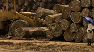 Logged timber in Liberia, where a new deal with Norway aims to shift focus from extraction to protection.