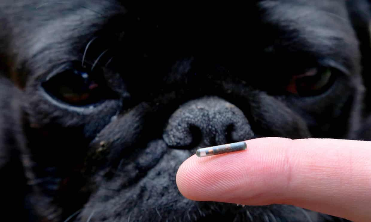 Dog and micro chip