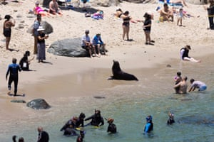 Beachgoers look at a sea lion as tourism makes a comeback in California