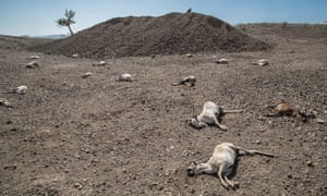 One-quarter of land in Ethiopia is degraded, affecting about 20 million people.