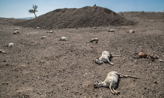Ethiopia's farmers fight devastating drought with land restoration