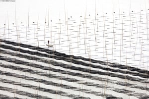 Diagonals 'The [photographic] outcomes turned out unexpectedly interesting when the elements appeared flattened without shadows and the image was distilled to lines and shapes, like a drawing,' Tugo Cheng, interviewed by National Geographic