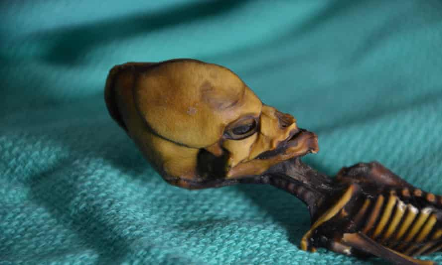 The mummified skeleton of a baby girl found in the Chilean desert in 2003.