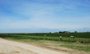 Organic Pastures raw dairy farm in Fresno, California.