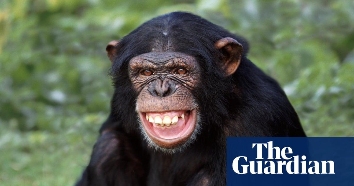 Jane Goodall Hails Awakening As Us Labels All Chimpanzees
