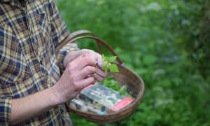 Foraging for edible plants along the river