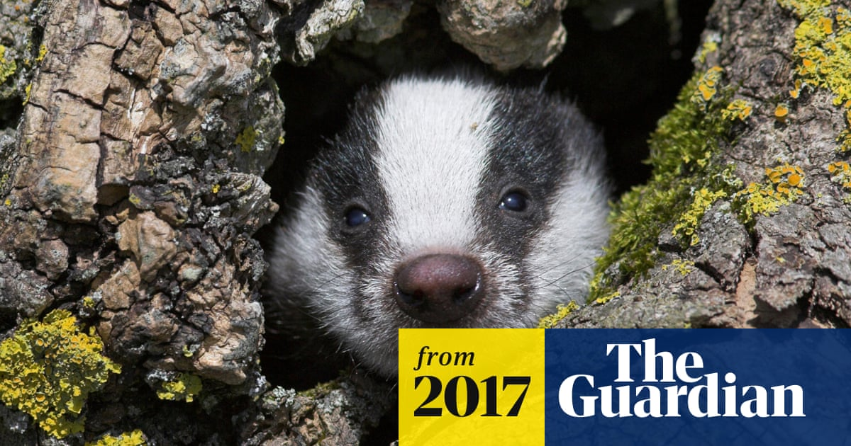 Taxpayers spend £500,000 on radios for badger cull marksmen