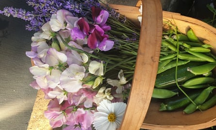 Sweet peas and peas from Tempest allotments, Otley, west Yorkshire