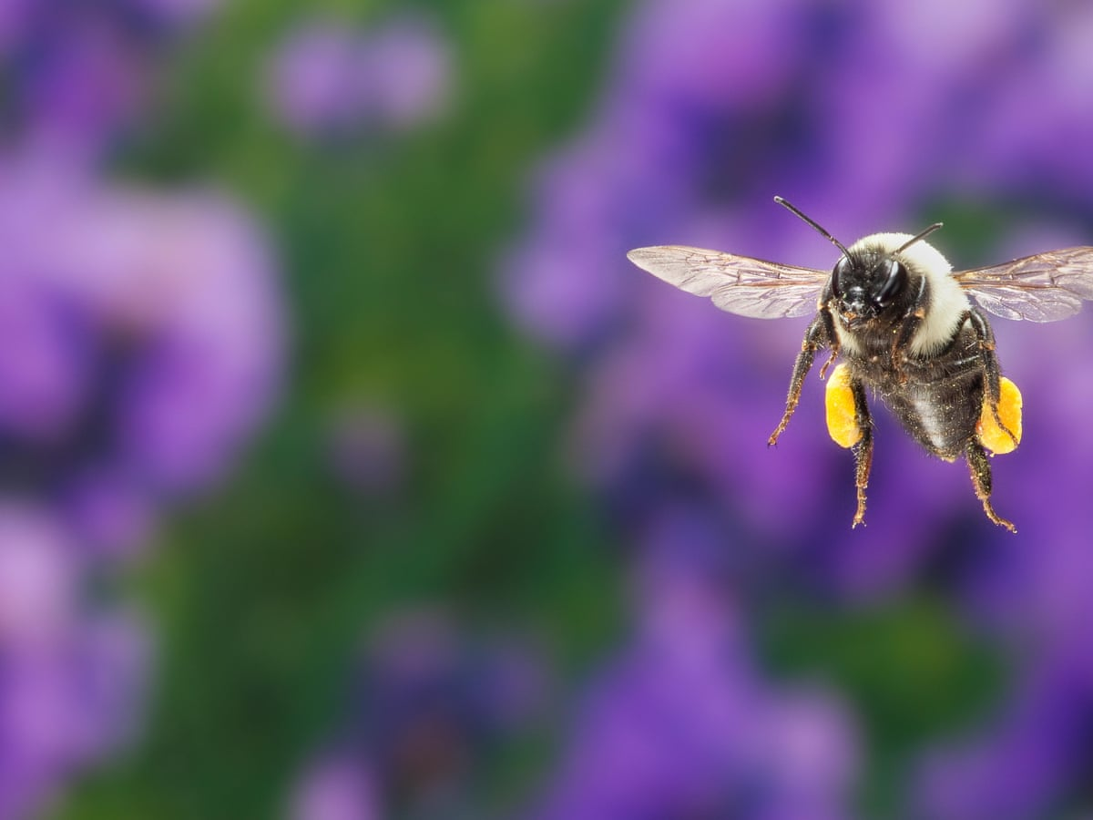 Bees And Flowers Have Had The World S Longest Love Affair Now It S In Danger Bees The Guardian