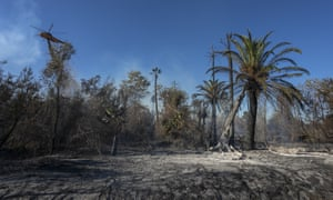 A firefighting helicopter makes a drop near palm trees at the 46 Fire on 31 October 2019 near San Bernardino, California.