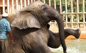 Karachi, Pakistan. An elephant cools amid a heatwave at Karachi zoo