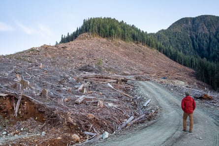 TJ Watt walks through a logged old-growth forest on Canada's Pacific coast.