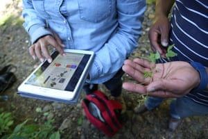 Crop Trust staff and partners collect bean wild relatives in Guatemala.