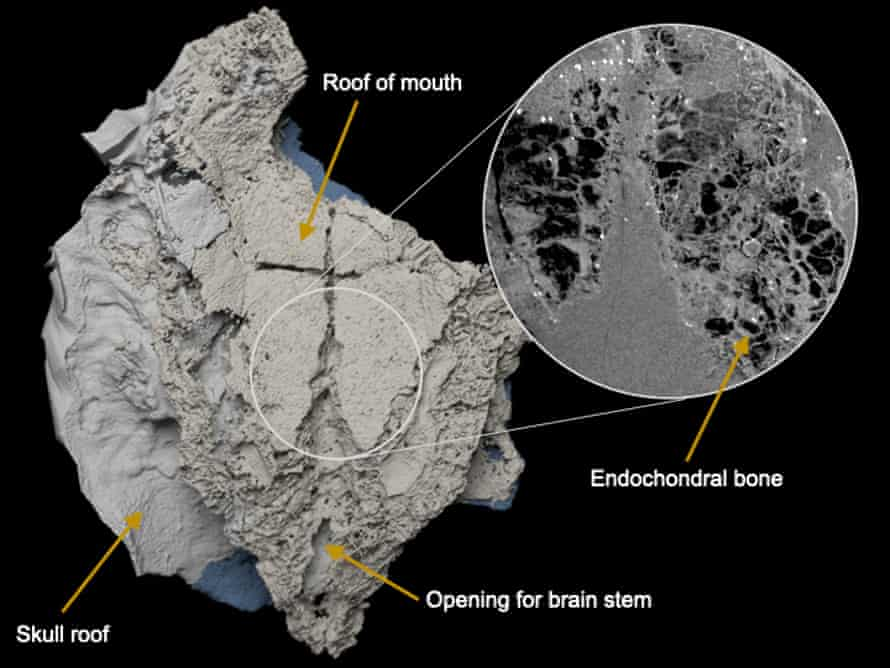 The placoderm fossil discovered in Mongolia in 2012.