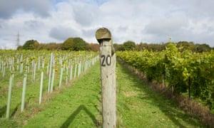 Bolney Estate vineyards