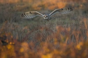 """Matthew Roseveare, 12-18 years category winner, The Golden Hour Hunt, Farlington, Hampshire """"As the light began to fade a short-eared owl emerged to hunt for prey above the marshes. Standing on the sea wall I was amazed when it began to fly towards me – it is a moment I will never forget!"""""""