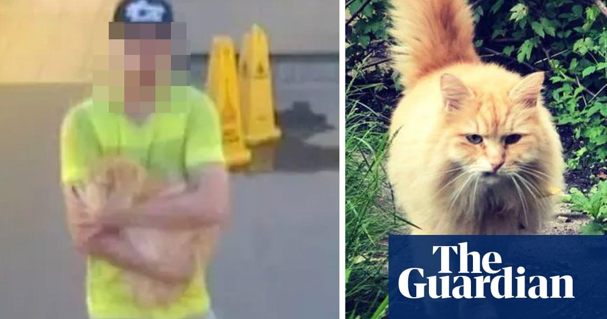 Police arrest man on suspicion of stealing pedigree cat