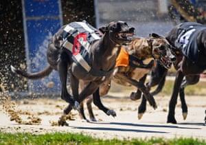 Perry Barr, England Greyhounds resume racing, behind closed doors, as restrictions on sporting events are relaxed