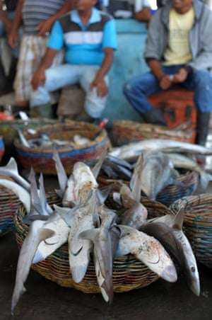 Fishermen selling thresher sharks