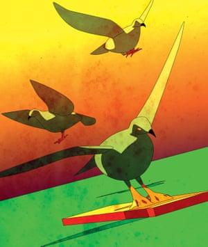 埃里克彼得森鸟类的插图,一个陷入陷阱