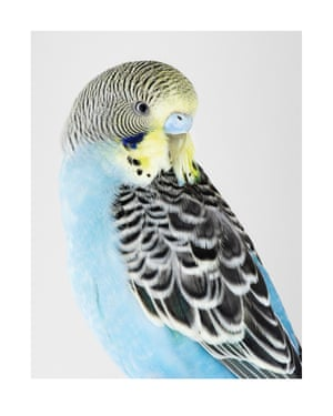 Buckbeak. Photograph on archival fibre-based cotton rag paper, 2019 (91 x 72cm).