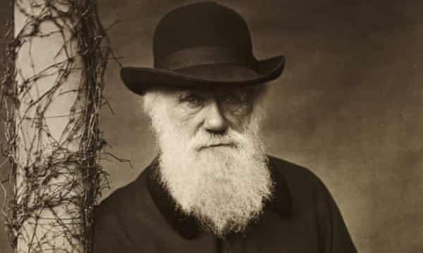 "Charles Darwin was accused by Wolfe of being a ""flycatcher""."