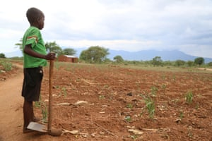 Precious, 13, inspects her family's failed crop in Malawi. Twenty-eight million people across six southern African countries face starvation due to a drought linked to the El Niño weather phenomenon