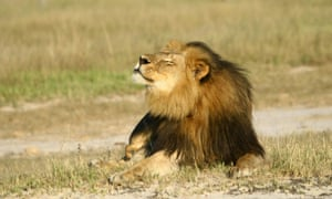 Animal rights advocates and conservation experts traveled to Vegas to condemn the industry, invoking the name of Cecil the lion as a symbol of the price of trophy hunting.