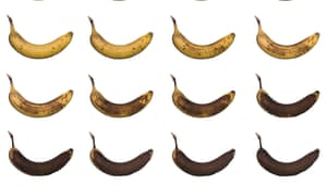 Bananas in various states of ripeness … where would you draw the line?