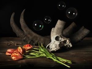 Ibex skull with tulips