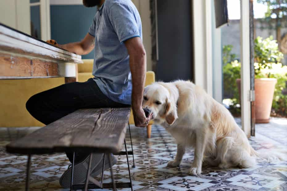 When the begging starts, it's hard to resist giving your pooch a bite from your meal.