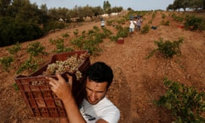 Greece is the word: workers at a vineyard in Keratea.